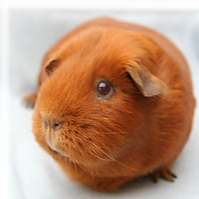 Treasurer  >> British Cavy Council - contact